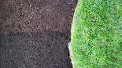 Dyed Mulch vs Non-Dyed Mulch