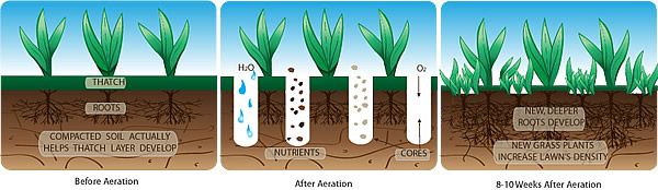 Aeration:Why, How & When to Aerate Your Lawn