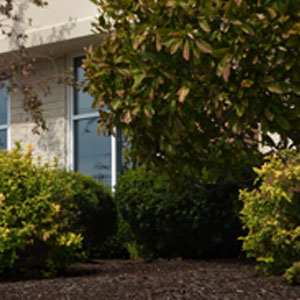 Landscaping - Commercial Mulching Services